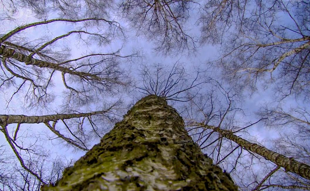Beze stromů není život