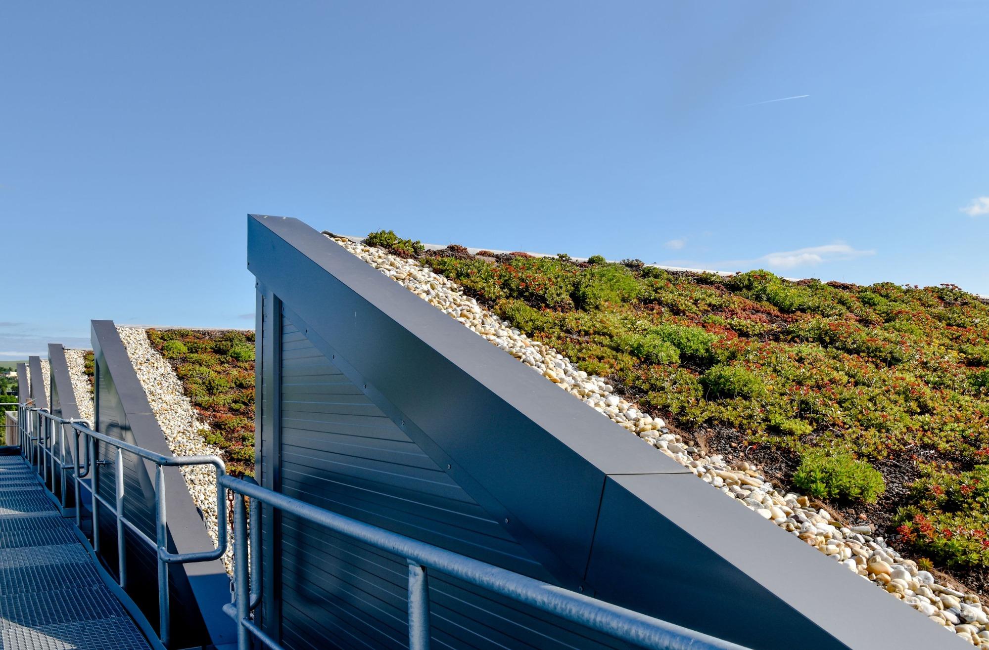 Zelené střechy pár let po vysázení a jejich údržba