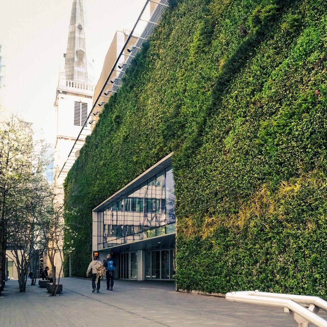 Ideální řešení pro trvale zelené stěny