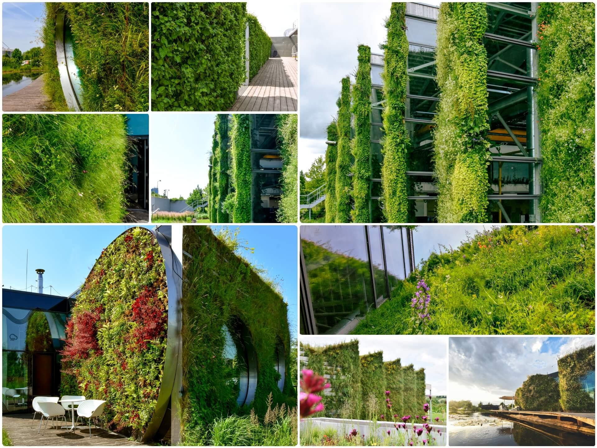 Jak pečovat o zelené fasády a stěny?