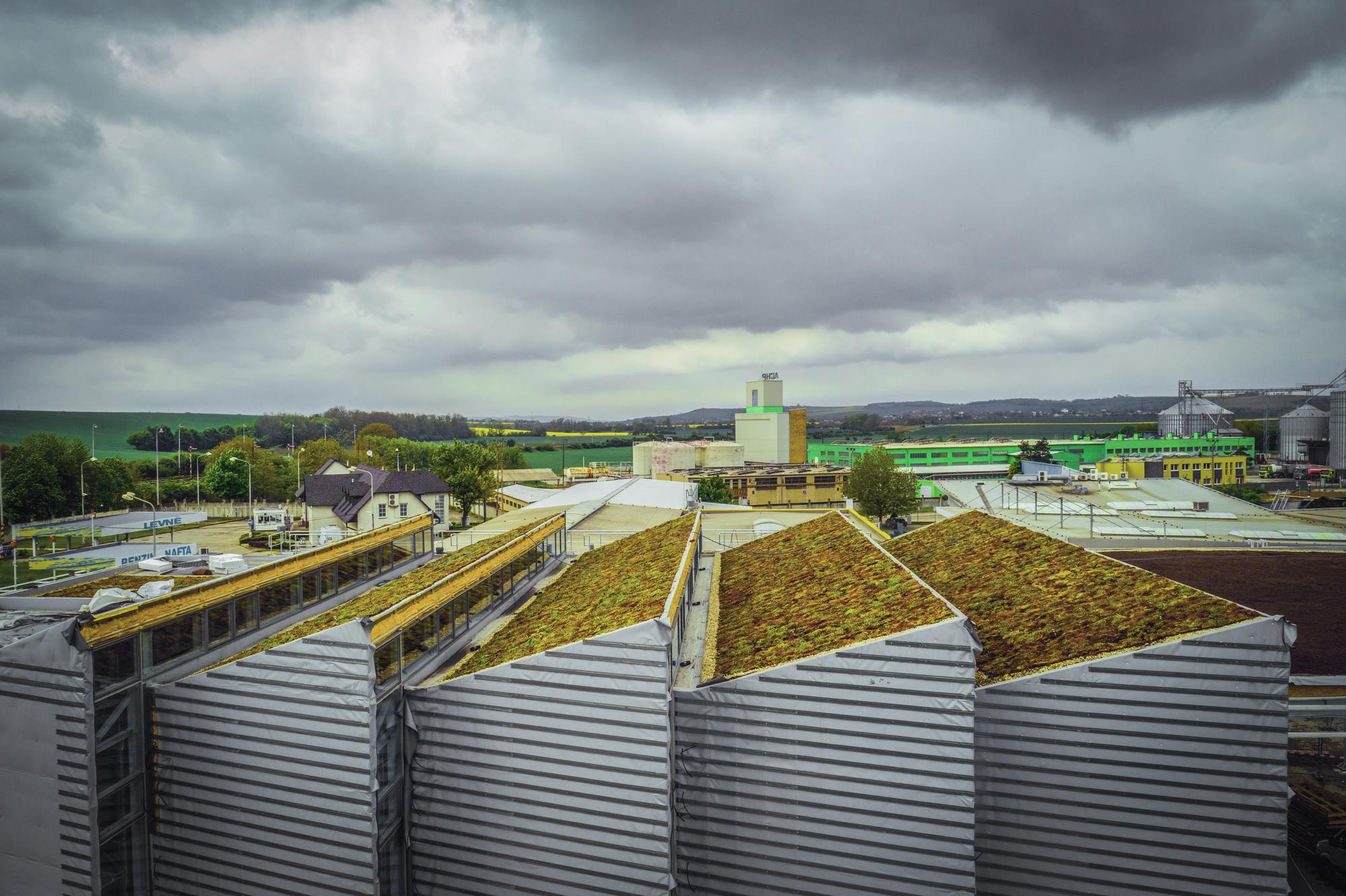 Střechy plné života