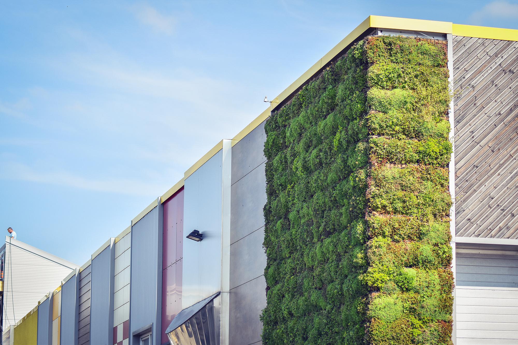 Zelená fasáda naší haly a džungle v Sydney
